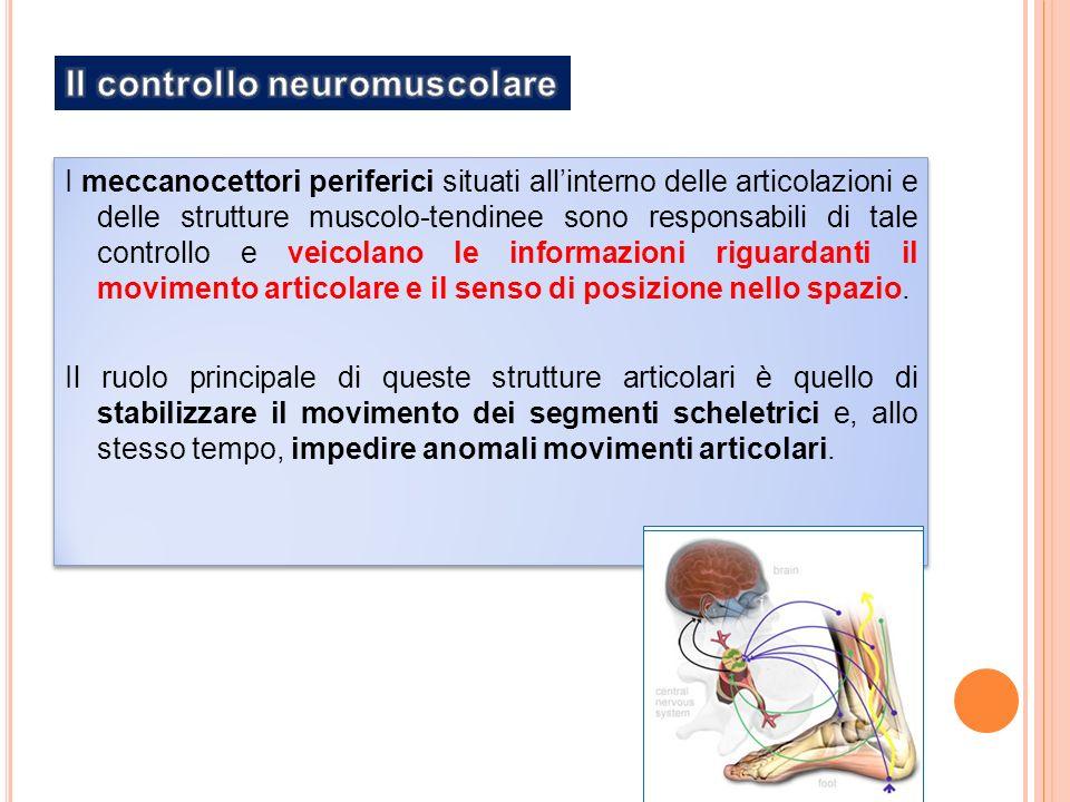 I meccanocettori periferici situati allinterno delle articolazioni e delle strutture muscolo-tendinee sono responsabili di tale controllo e veicolano le informazioni riguardanti il movimento articolare e il senso di posizione nello spazio.