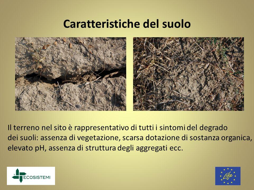 Caratteristiche del suolo Il terreno nel sito è rappresentativo di tutti i sintomi del degrado dei suoli: assenza di vegetazione, scarsa dotazione di