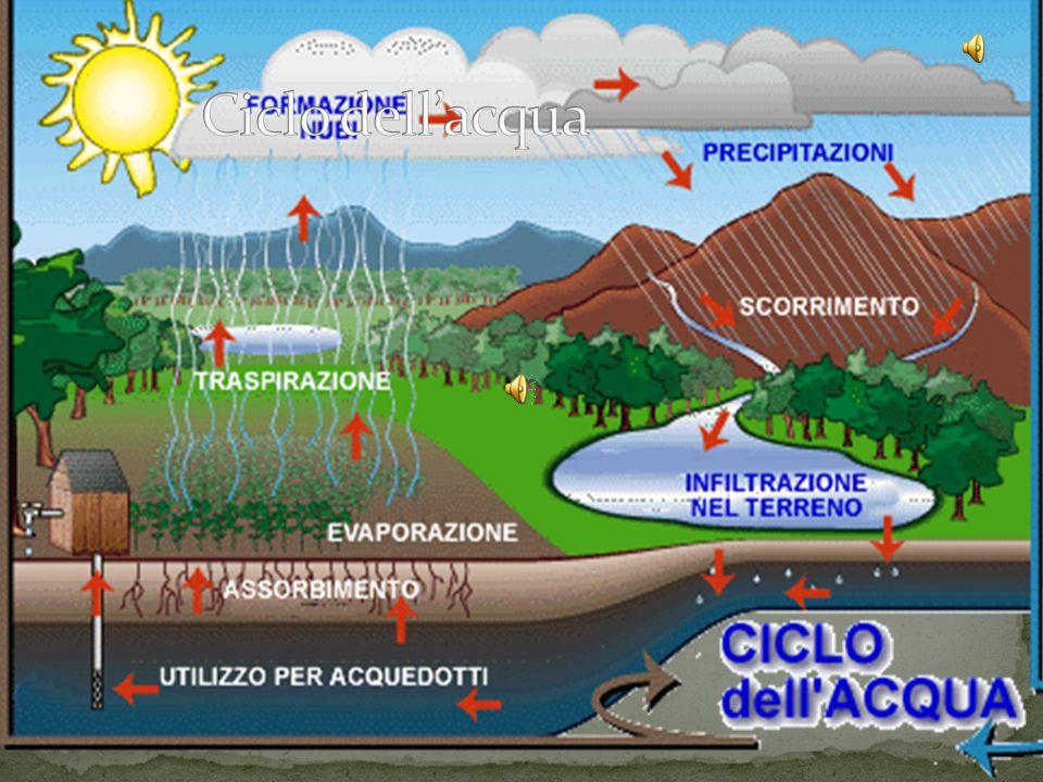 La capillarità è un fenomeno che permette all'acqua di salire in tubicini molto sottili. La capillarità è un fenomeno che permette all'acqua di salire