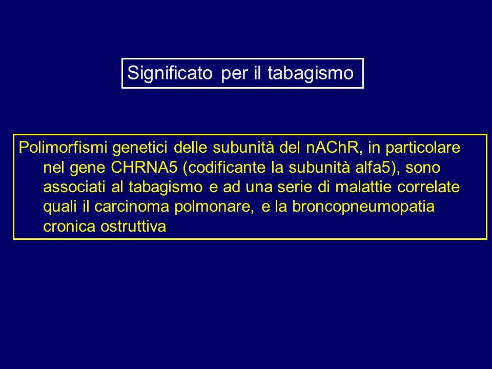 Polimorfismi genetici delle subunità del nAChR, in particolare nel gene CHRNA5 (codificante la subunità alfa5), sono associati al tabagismo e ad una s