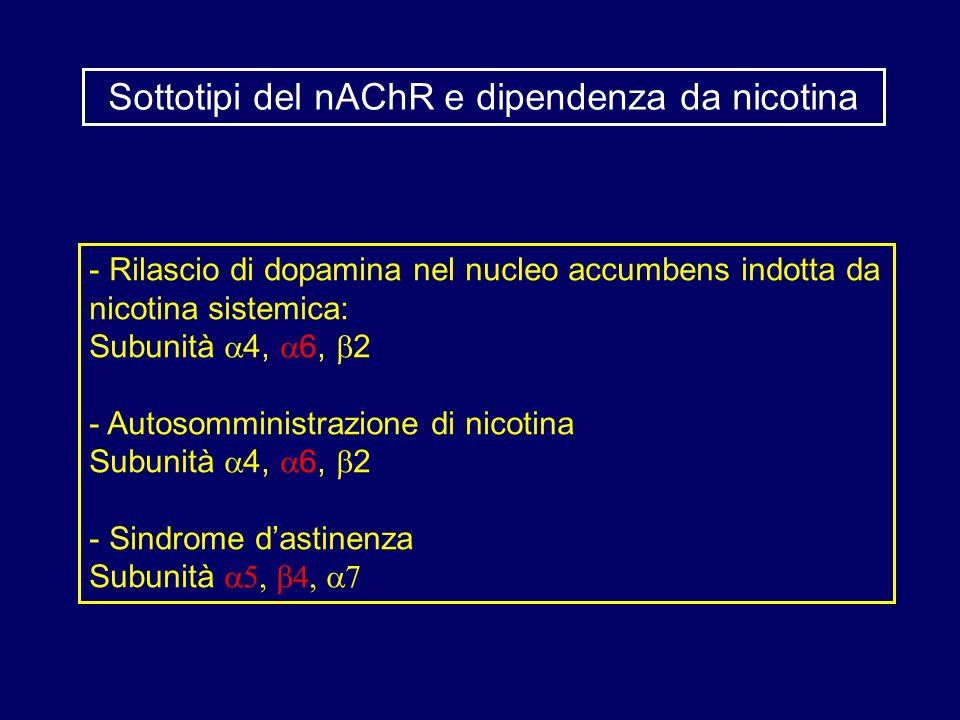 - Rilascio di dopamina nel nucleo accumbens indotta da nicotina sistemica: Subunità 4, 6, 2 - Autosomministrazione di nicotina Subunità 4, 6, 2 - Sind