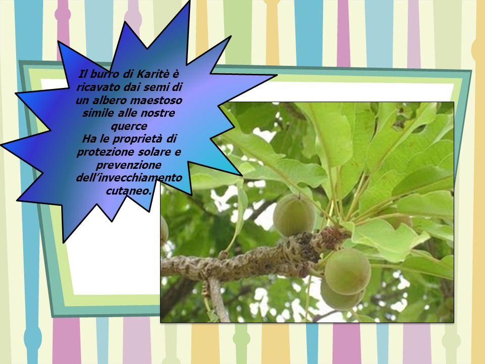 Il burro di Karitè è ricavato dai semi di un albero maestoso simile alle nostre querce Ha le proprietà di protezione solare e prevenzione dellinvecchi