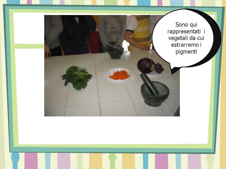 Sono qui rappresentati i vegetali da cui estrarremo i pigmenti