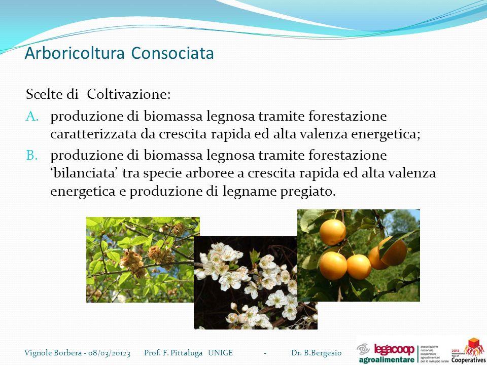 Arboricoltura Consociata Scelte di Coltivazione: A. produzione di biomassa legnosa tramite forestazione caratterizzata da crescita rapida ed alta vale