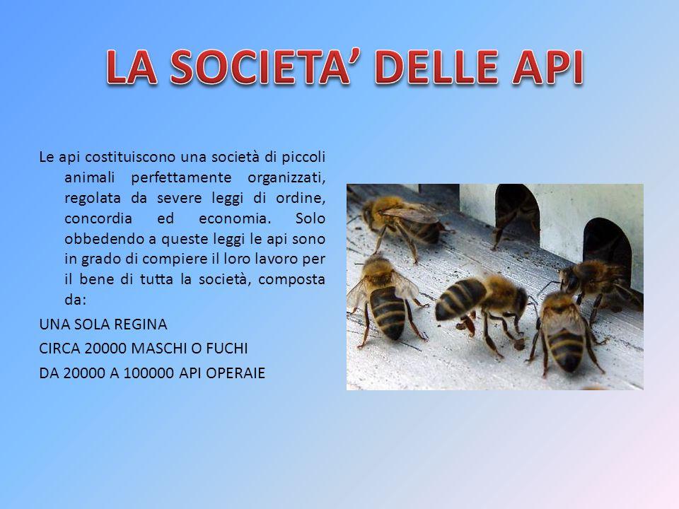 Le api costituiscono una società di piccoli animali perfettamente organizzati, regolata da severe leggi di ordine, concordia ed economia. Solo obbeden