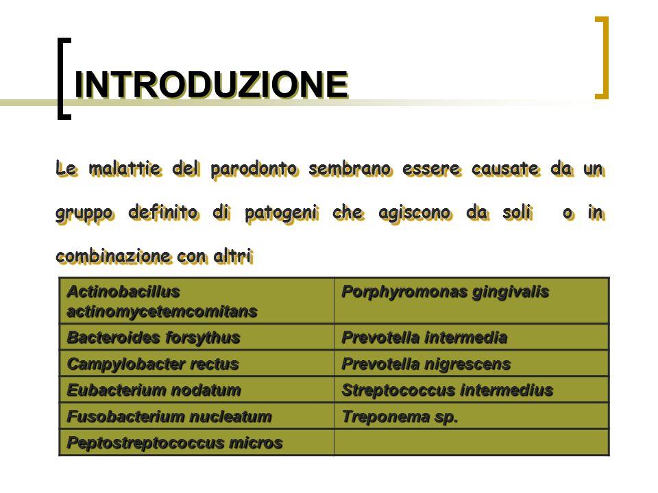 BATTERI ASSOCIATI ALLA MALATTIA PARODONTALE Porphyromonas gingivalis Bastoncello Gram-, asaccarolitico, non mobile con morfologia a cocco o bastoncello corto.