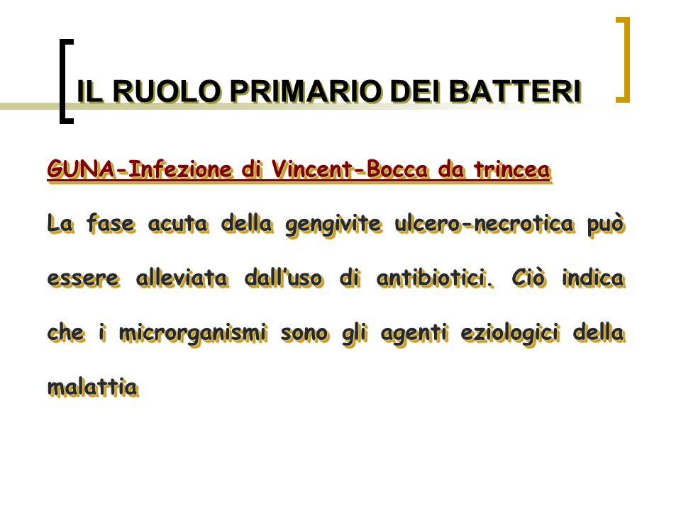 FORMAZIONE E MATURAZIONE DELLA PLACCA BATTERICA Con lestendersi della colonia batterica si viene a creare n gradiente di concentrazione decrescente di O.