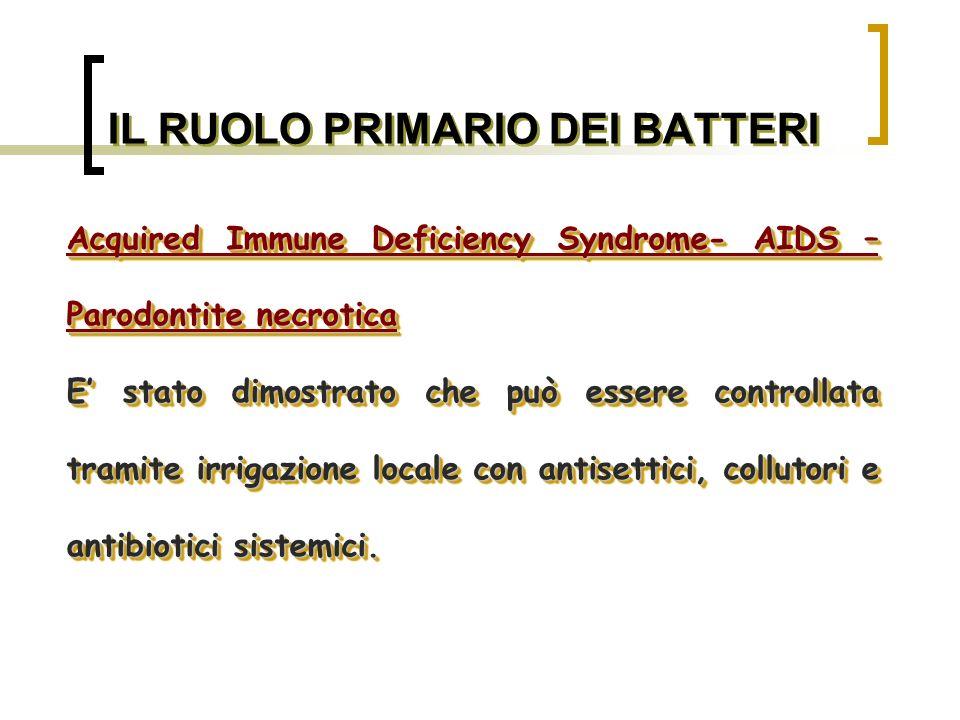 BATTERI ASSOCIATI ALLA MALATTIA PARODONTALE Bacteroides forsythus Bastoncello Gram-, anaerobico, affusolato.