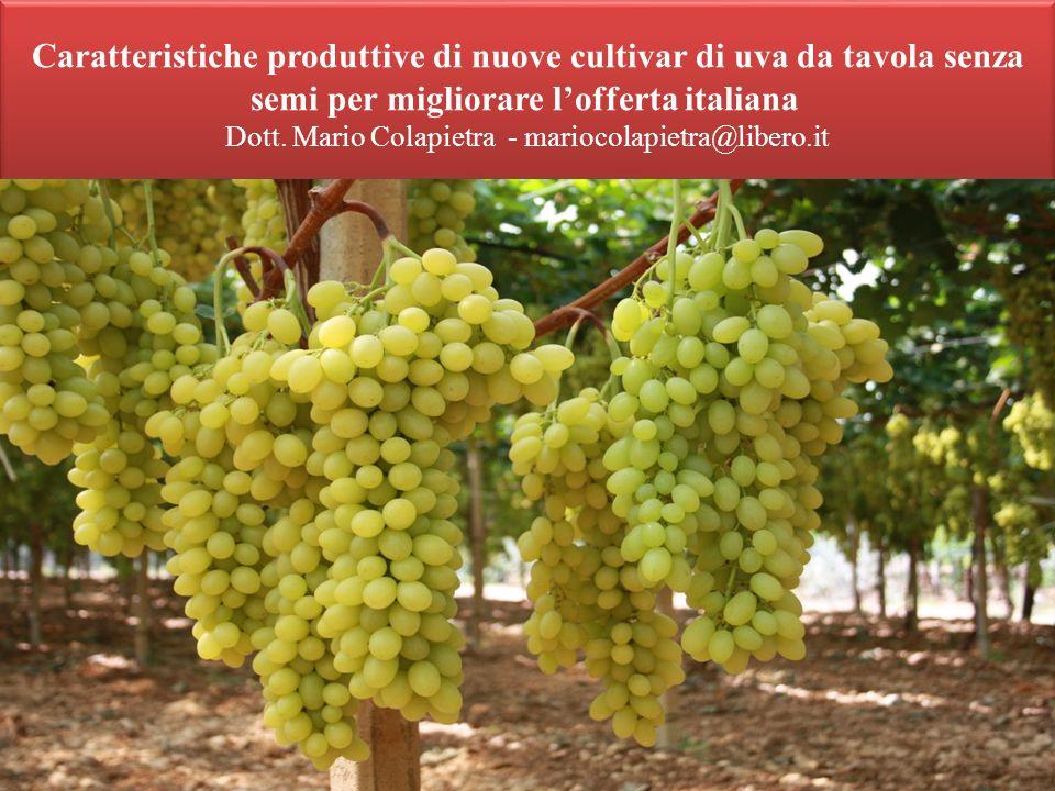 Caratteristiche produttive di nuove cultivar di uva da tavola senza semi per migliorare lofferta italiana Dott. Mario Colapietra - mariocolapietra@lib