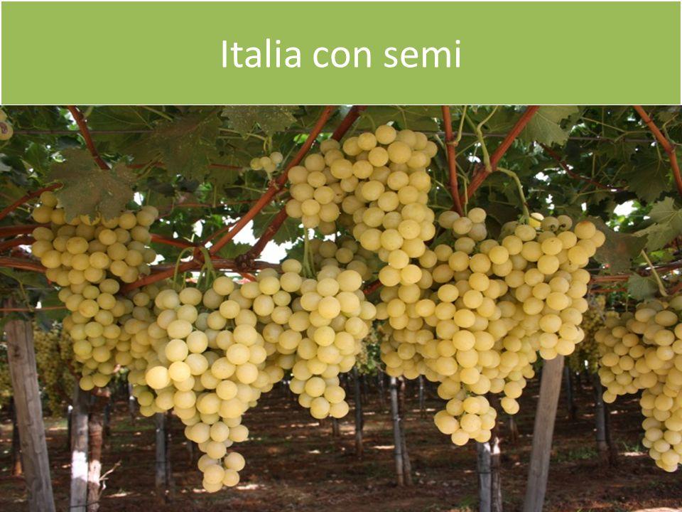 Italia con semi