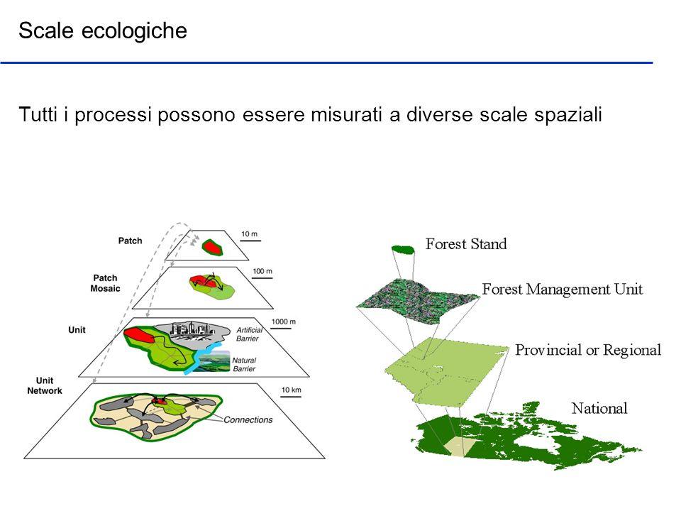 Quando parliamo di scala possiamo distinguere fra risoluzione (grain) ed estensione (extent) Scale ecologiche