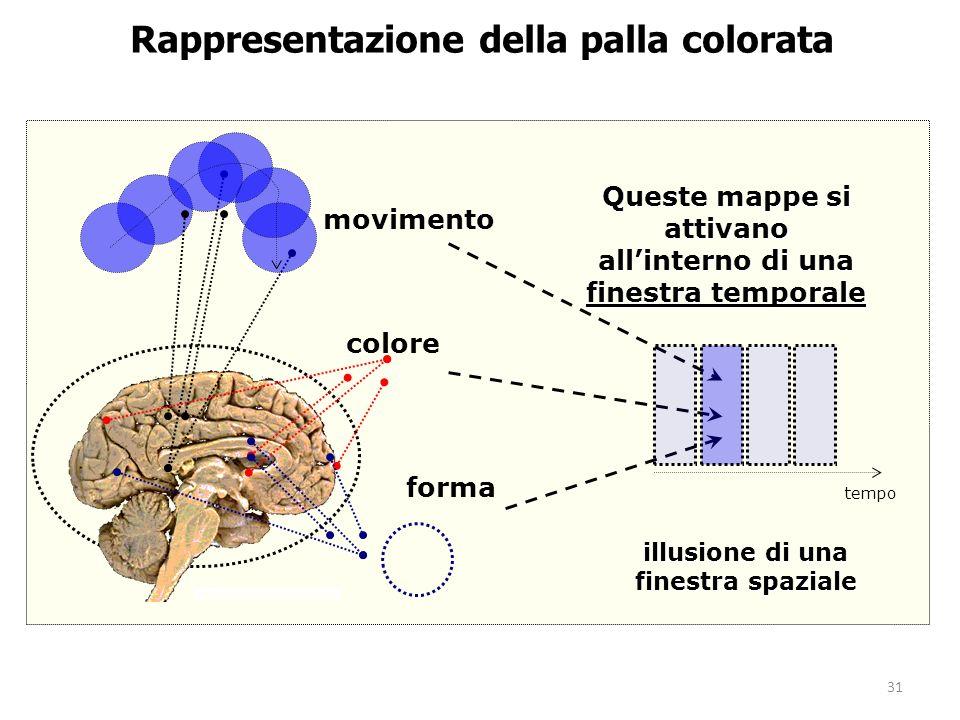 31 Rappresentazione della palla colorata movimento forma colore Queste mappe si attivano allinterno di una finestra temporale illusione di una finestr
