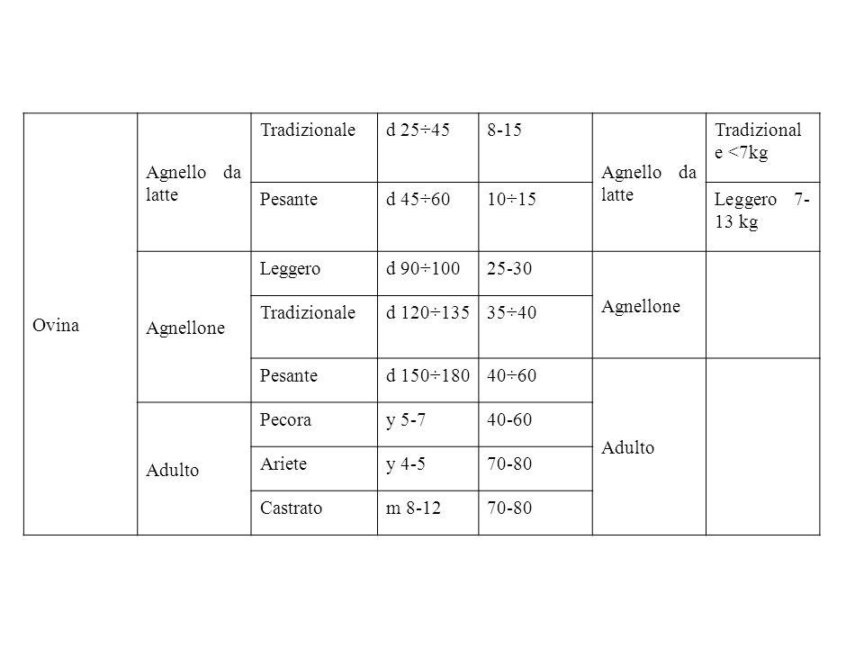 Ovina Agnello da latte Tradizionaled 25÷458-15 Agnello da latte Tradizional e <7kg Pesanted 45÷6010÷15Leggero 7- 13 kg Agnellone Leggerod 90÷10025-30 Agnellone Tradizionaled 120÷13535÷40 Pesanted 150÷18040÷60 Adulto Pecoray 5-740-60 Arietey 4-570-80 Castratom 8-1270-80