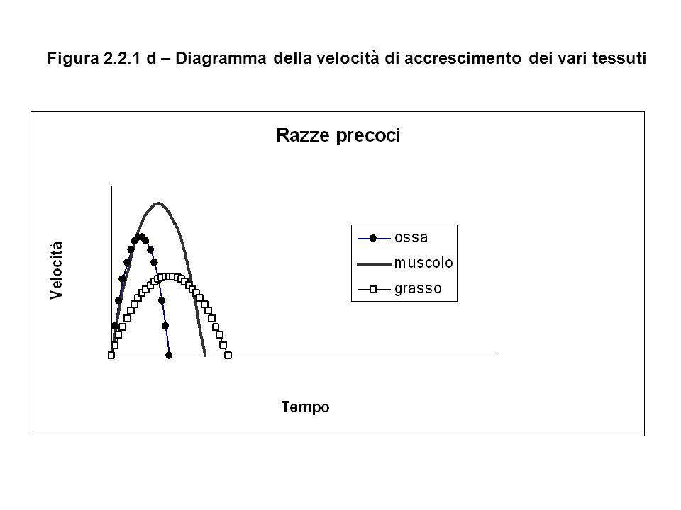 Figura 2.2.1 d – Diagramma della velocità di accrescimento dei vari tessuti