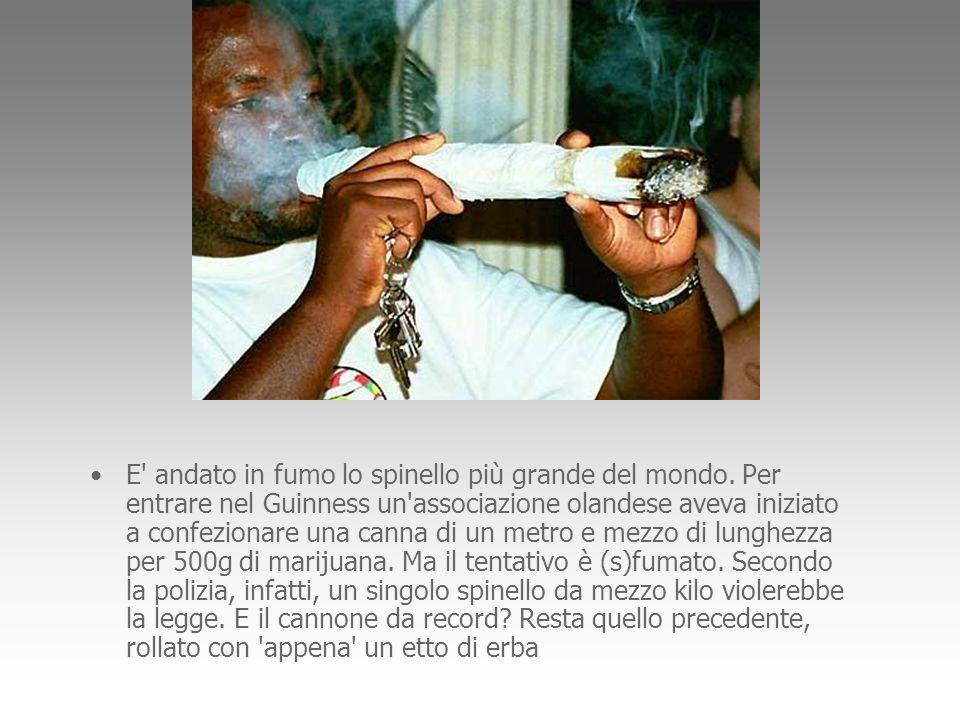 E' andato in fumo lo spinello più grande del mondo. Per entrare nel Guinness un'associazione olandese aveva iniziato a confezionare una canna di un me