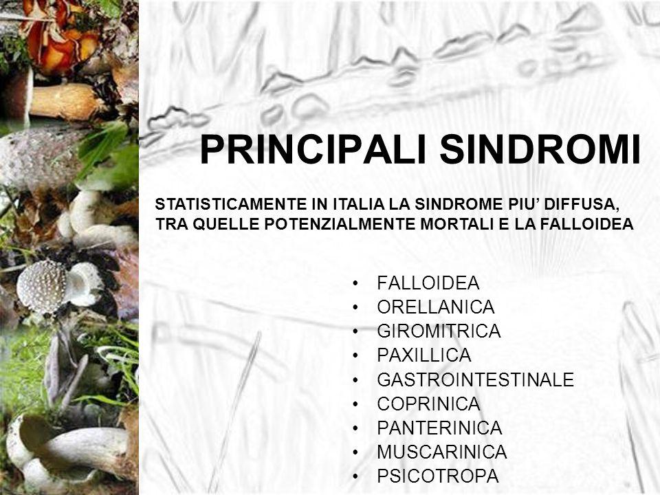 PRINCIPALI SINDROMI FALLOIDEA ORELLANICA GIROMITRICA PAXILLICA GASTROINTESTINALE COPRINICA PANTERINICA MUSCARINICA PSICOTROPA STATISTICAMENTE IN ITALI