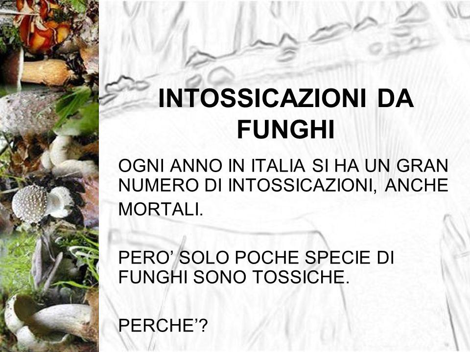 INTOSSICAZIONI DA FUNGHI OGNI ANNO IN ITALIA SI HA UN GRAN NUMERO DI INTOSSICAZIONI, ANCHE MORTALI. PERO SOLO POCHE SPECIE DI FUNGHI SONO TOSSICHE. PE