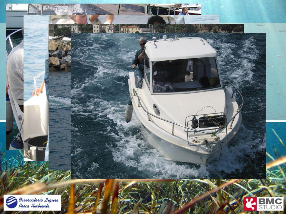 Progetto Tritone Rilevamento e analisi dei banchi di Posidonia Relazione sullavanzamento del progetto