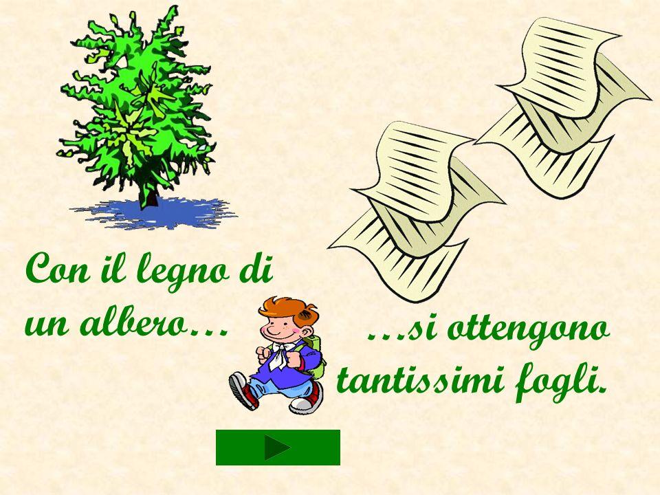 Dal legno di alcuni alberi… … si ricava la carta.