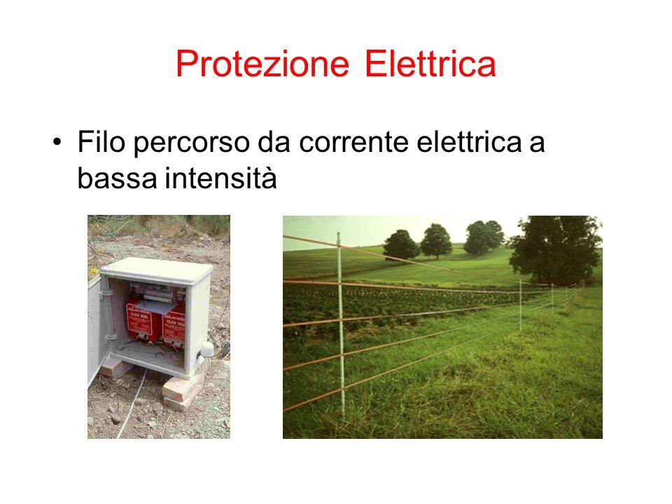 Protezione Elettrica Filo percorso da corrente elettrica a bassa intensità