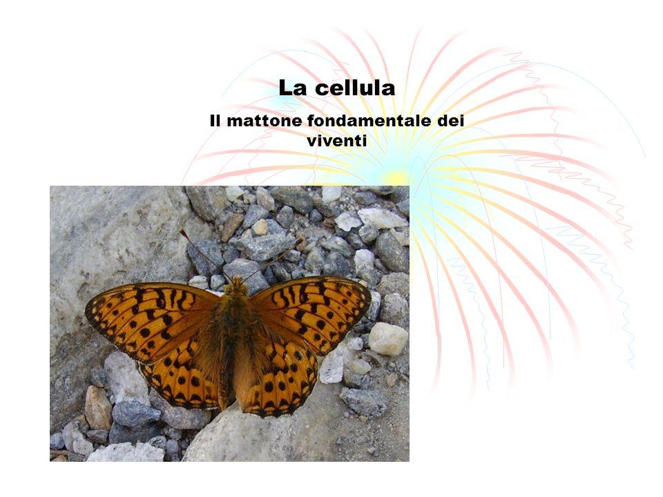 La cellula Il mattone fondamentale dei viventi