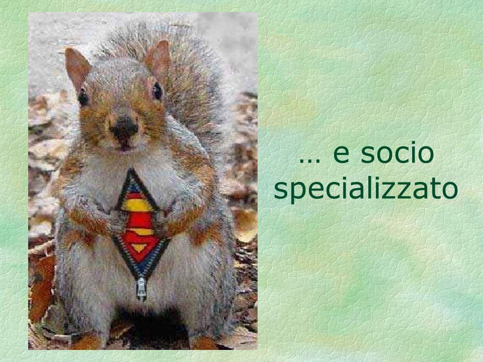 … e socio specializzato