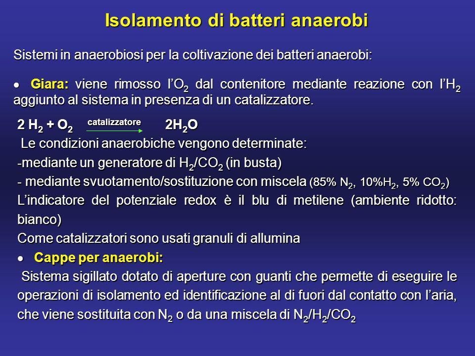 Isolamento di batteri anaerobi Sistemi in anaerobiosi per la coltivazione dei batteri anaerobi: Giara: viene rimosso lO 2 dal contenitore mediante reazione con lH 2 aggiunto al sistema in presenza di un catalizzatore.