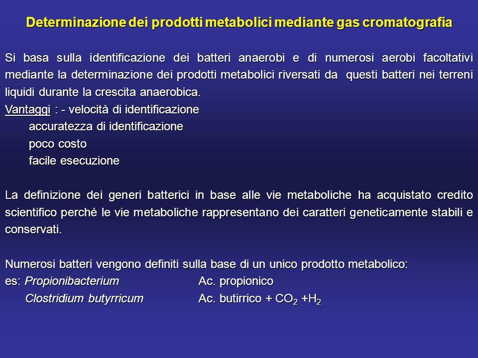 Determinazione dei prodotti metabolici mediante gas cromatografia Si basa sulla identificazione dei batteri anaerobi e di numerosi aerobi facoltativi mediante la determinazione dei prodotti metabolici riversati da questi batteri nei terreni liquidi durante la crescita anaerobica.