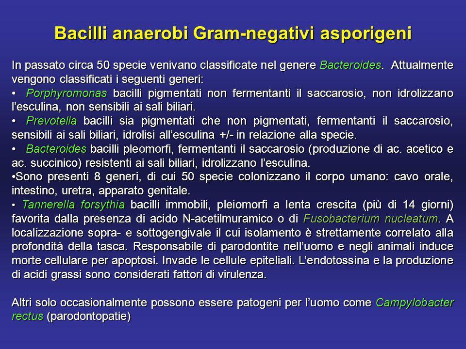 Bacilli anaerobi Gram-negativi asporigeni In passato circa 50 specie venivano classificate nel genere Bacteroides.