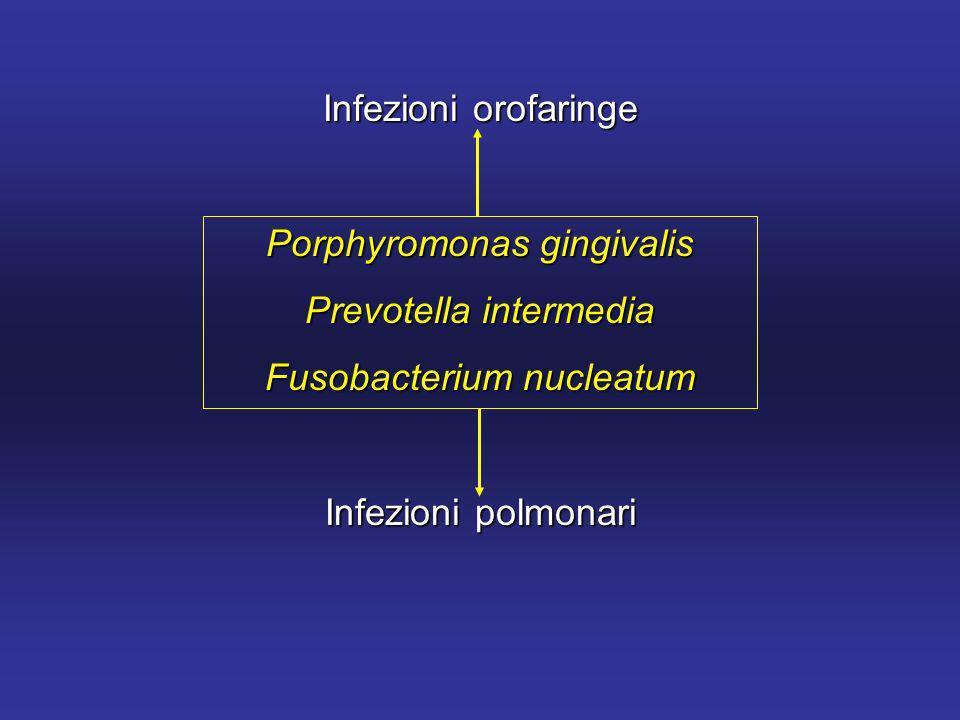 Infezioni orofaringe Porphyromonas gingivalis Prevotella intermedia Fusobacterium nucleatum Infezioni polmonari