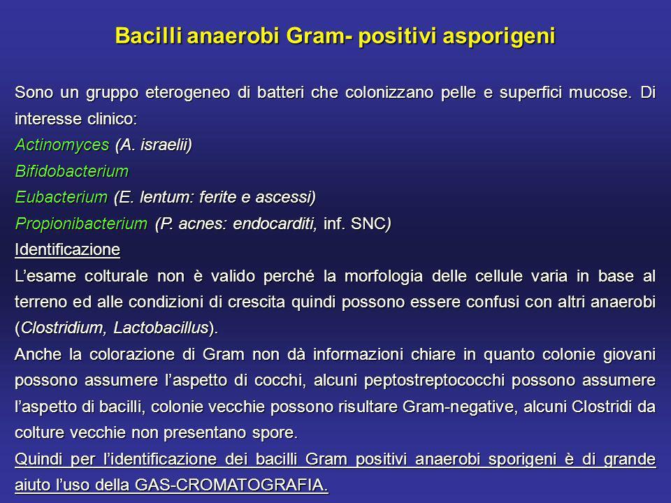 Bacilli anaerobi Gram- positivi asporigeni Sono un gruppo eterogeneo di batteri che colonizzano pelle e superfici mucose.