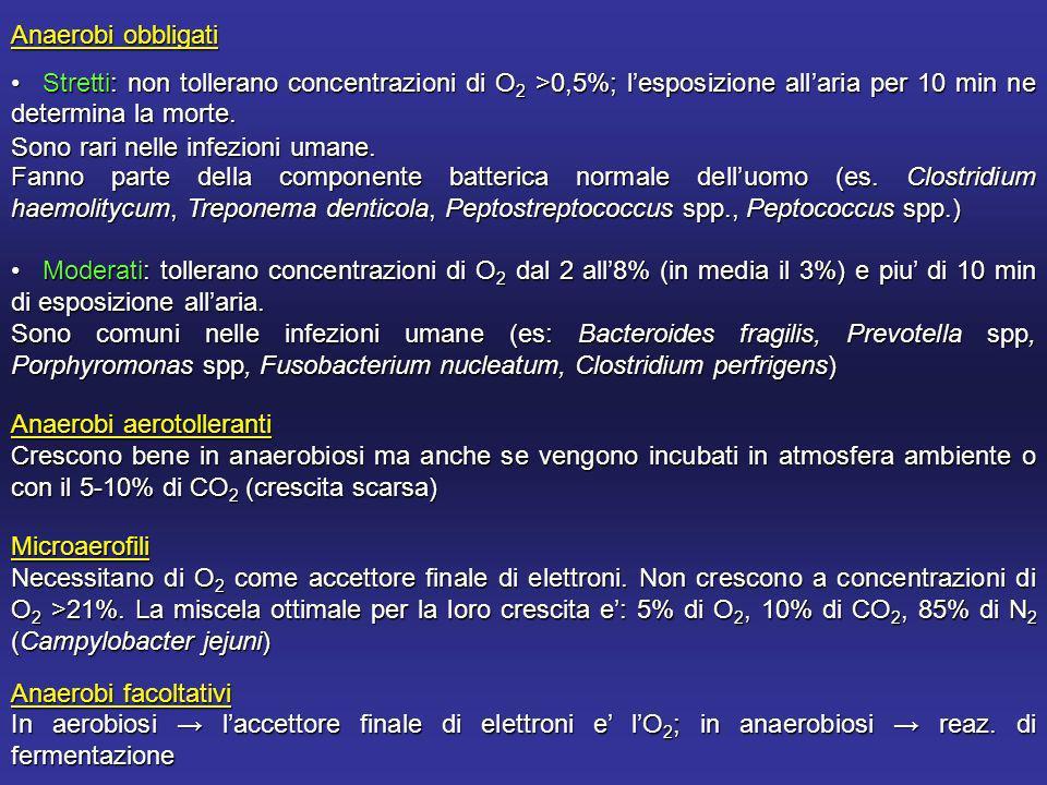Anaerobi obbligati Stretti: non tollerano concentrazioni di O 2 >0,5%; lesposizione allaria per 10 min ne determina la morte.
