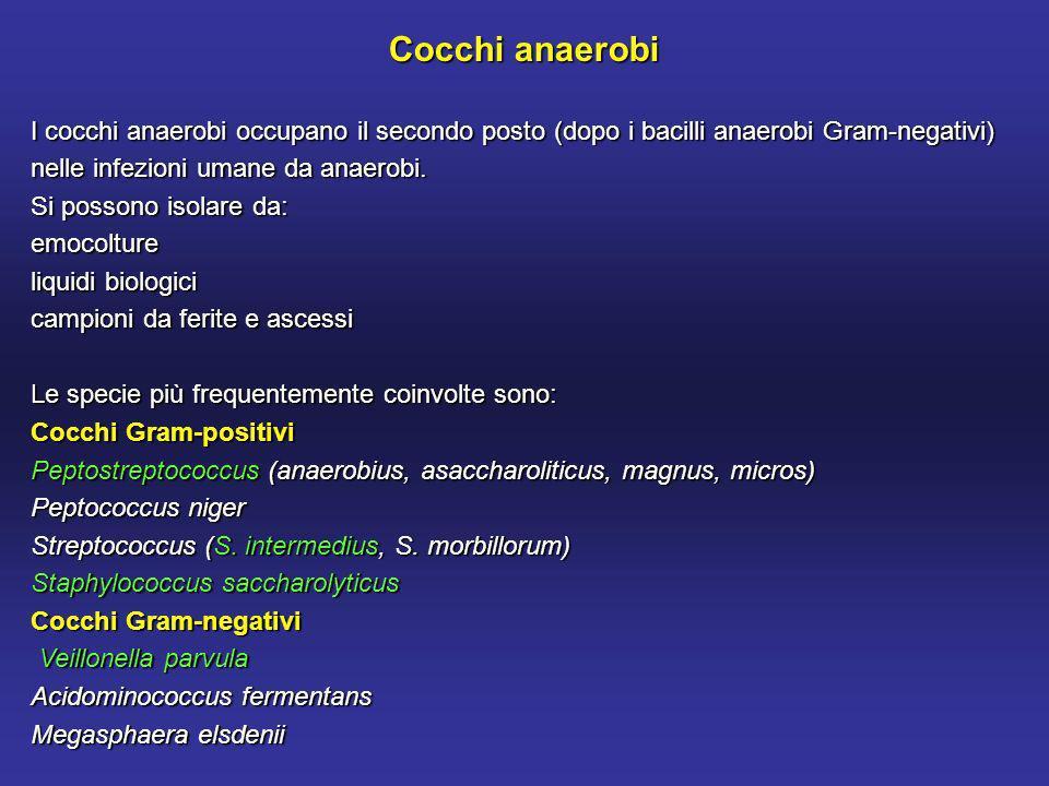 Cocchi anaerobi I cocchi anaerobi occupano il secondo posto (dopo i bacilli anaerobi Gram-negativi) nelle infezioni umane da anaerobi.