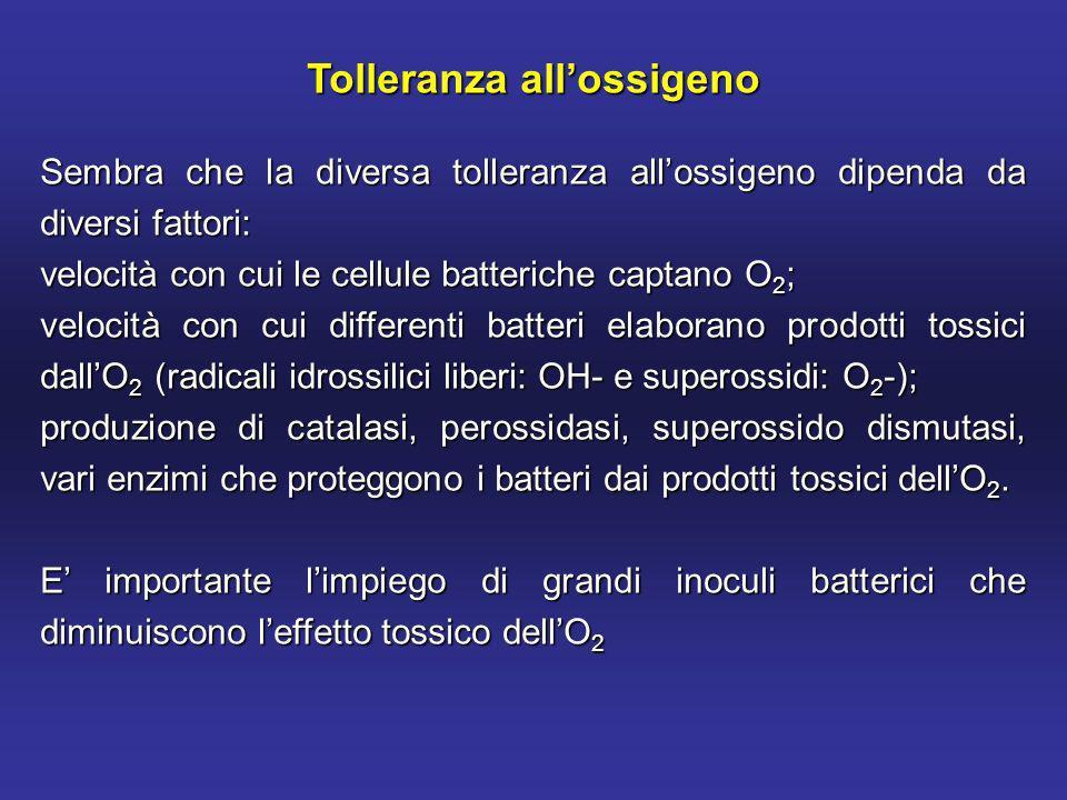 Tolleranza allossigeno Sembra che la diversa tolleranza allossigeno dipenda da diversi fattori: velocità con cui le cellule batteriche captano O 2 ; velocità con cui differenti batteri elaborano prodotti tossici dallO 2 (radicali idrossilici liberi: OH- e superossidi: O 2 -); produzione di catalasi, perossidasi, superossido dismutasi, vari enzimi che proteggono i batteri dai prodotti tossici dellO 2.