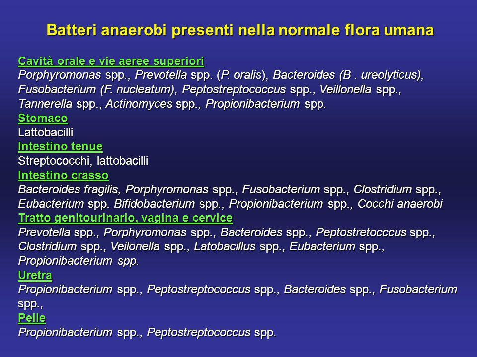 Batteri anaerobi presenti nella normale flora umana Cavità orale e vie aeree superiori Porphyromonas spp., Prevotella spp.
