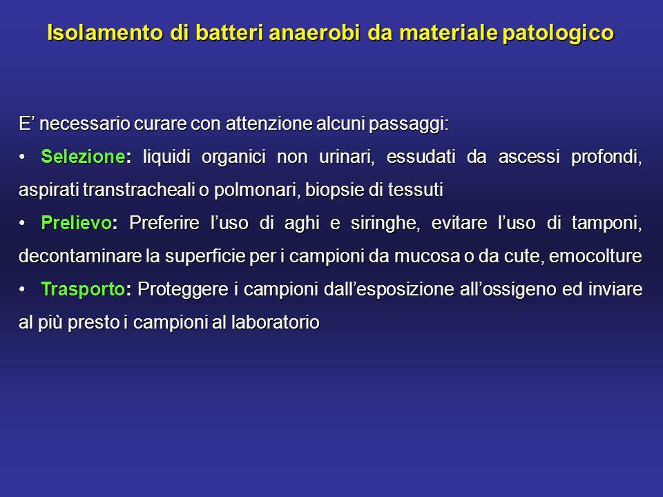 Actinomyces spp.