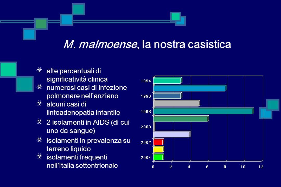 Mycobacterium malmoense specie nota da oltre 30 anni frequente causa di pneumopatie e linfoadeniti in Scandinavia e Gran Bretagna non molto frequente