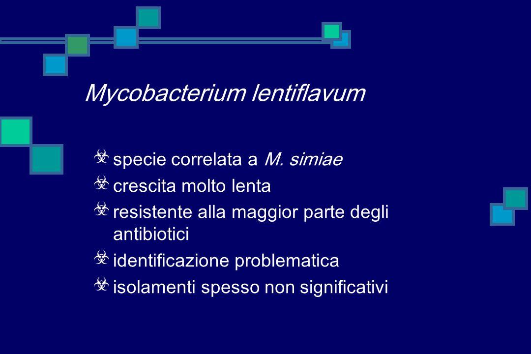 M. malmoense, la nostra casistica alte percentuali di significatività clinica numerosi casi di infezione polmonare nellanziano alcuni casi di linfoade