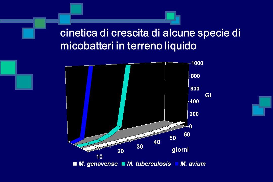 cinetica di crescita di alcune specie di micobatteri in terreno liquido