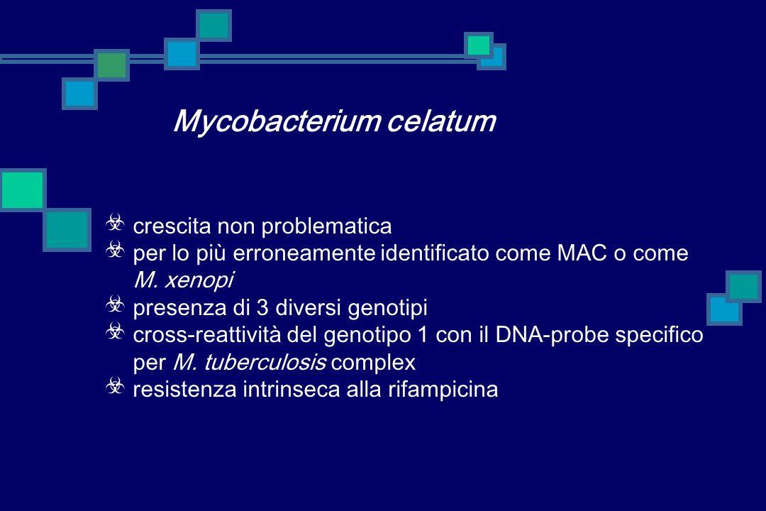 Mycobacterium celatum crescita non problematica per lo più erroneamente identificato come MAC o come M.