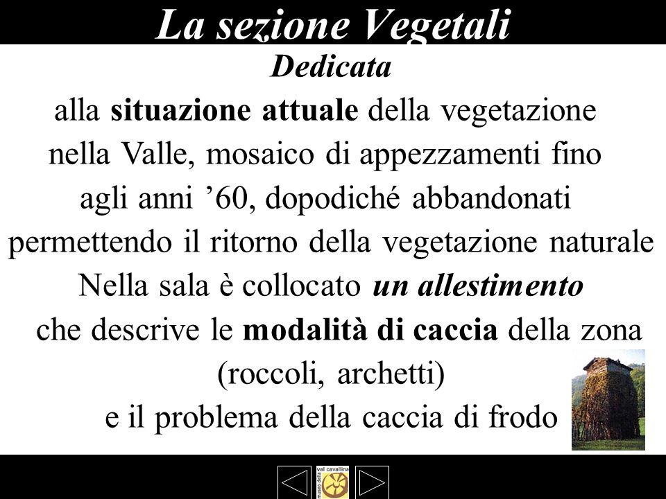 La sezione Vegetali Dedicata alla situazione attuale della vegetazione nella Valle, mosaico di appezzamenti fino agli anni 60, dopodiché abbandonati p