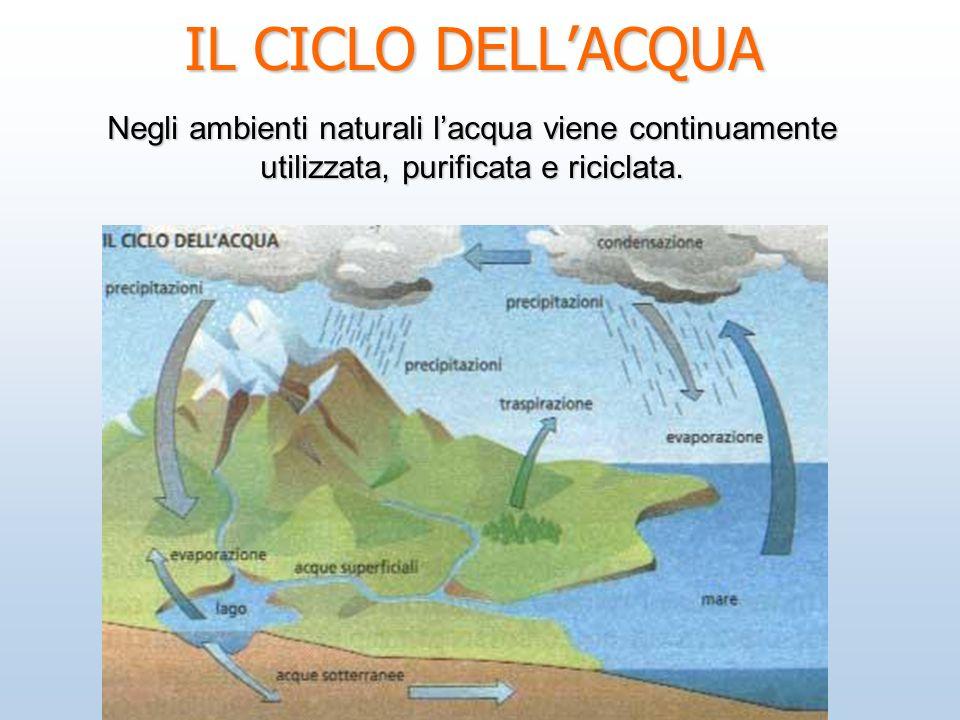 IL CICLO DELLACQUA Negli ambienti naturali lacqua viene continuamente utilizzata, purificata e riciclata.