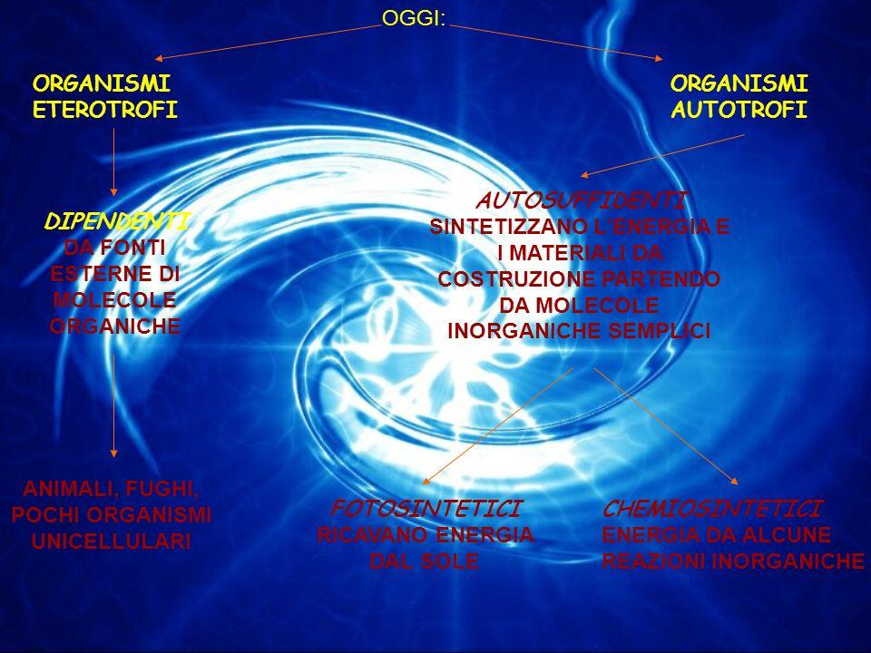 ORGANISMI ETEROTROFI ORGANISMI AUTOTROFI DIPENDENTI DA FONTI ESTERNE DI MOLECOLE ORGANICHE ANIMALI, FUGHI, POCHI ORGANISMI UNICELLULARI AUTOSUFFIDENTI