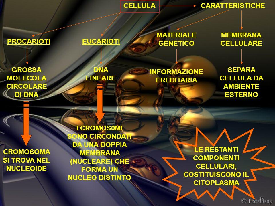 CELLULACARATTERISTICHE MEMBRANA CELLULARE SEPARA CELLULA DA AMBIENTE ESTERNO MATERIALE GENETICO INFORMAZIONE EREDITARIA PROCARIOTIEUCARIOTI GROSSA MOL