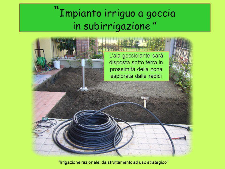 Impianto irriguo a goccia in subirrigazione Irrigazione razionale: da sfruttamento ad uso strategico Lala gocciolante sarà disposta sotto terra in pro