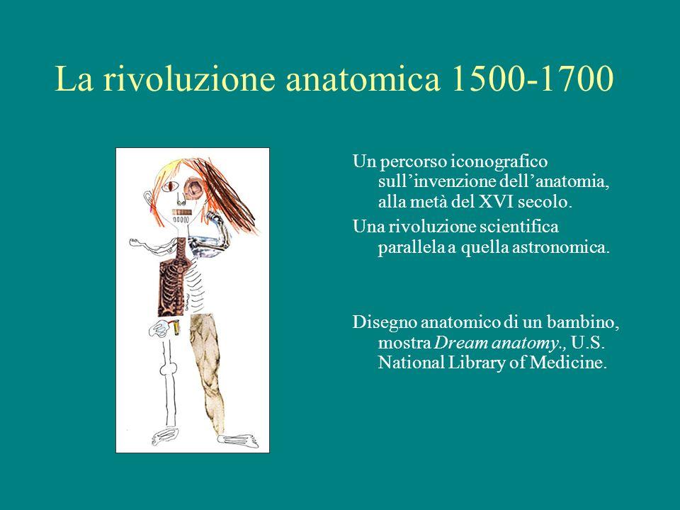 La rivoluzione anatomica 1500-1700 Un percorso iconografico sullinvenzione dellanatomia, alla metà del XVI secolo. Una rivoluzione scientifica paralle