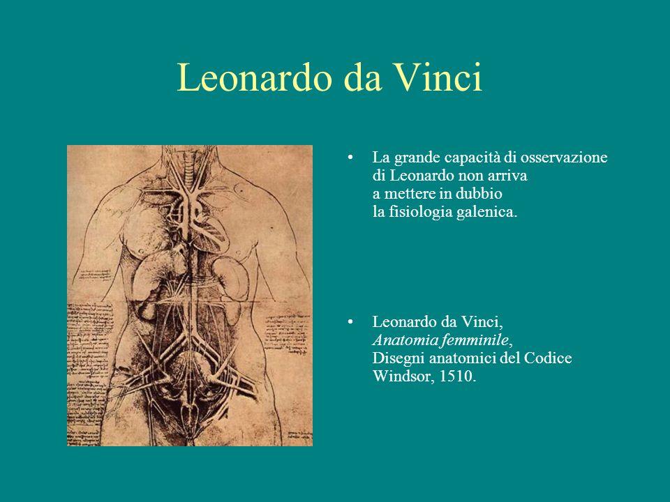 Leonardo da Vinci La grande capacità di osservazione di Leonardo non arriva a mettere in dubbio la fisiologia galenica. Leonardo da Vinci, Anatomia fe