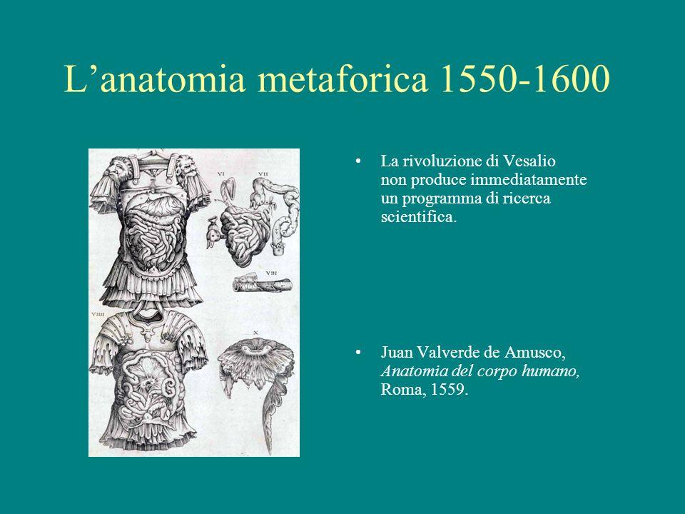 Lanatomia metaforica 1550-1600 La rivoluzione di Vesalio non produce immediatamente un programma di ricerca scientifica. Juan Valverde de Amusco, Anat