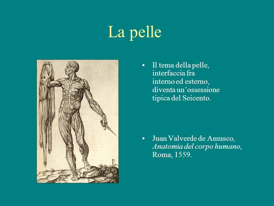 La pelle Il tema della pelle, interfaccia fra interno ed esterno, diventa unossessione tipica del Seicento. Juan Valverde de Amusco, Anatomia del corp