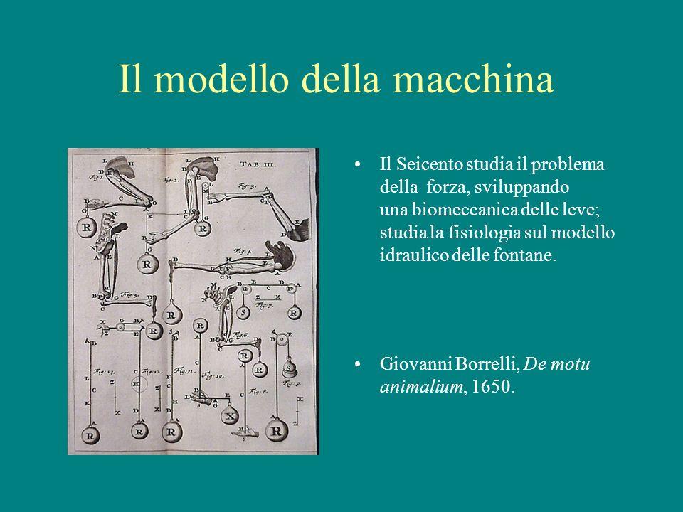Il modello della macchina Il Seicento studia il problema della forza, sviluppando una biomeccanica delle leve; studia la fisiologia sul modello idraul